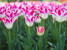 flower plants how to plant a cut flower garden 8 steps with pictures