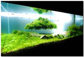 Aquarium Aquascapes Free Ideas Fancy Aquascaping Large Glasses Aquarium Designs Green