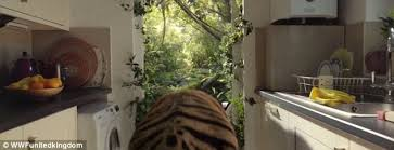 Home Interior Tiger Picture Wwf Christmas Advert Is The Cutest You Will Ever See Daily Mail