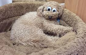 Googly Eyes Meme - googly eyes placed onto your sleeping pet instant disney dog funny