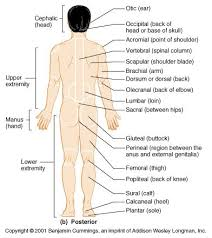 Picture Of Anatomical Position 83 Best Human Anatomy U0026 Physiology Images On Pinterest Nursing