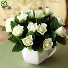 Fragrant Jasmine Plant - fragrant jasmine plants online fragrant jasmine plants for sale