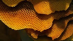 honeycomb edible why honey is the only food that doesn t go bad
