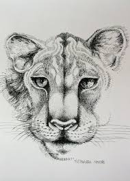 pen u0026 ink drawing of an african lioness u0027 face aftcra