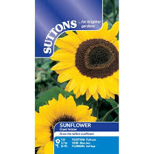 sunflower seed packets 25 best suttons sunflowers images on sunflower