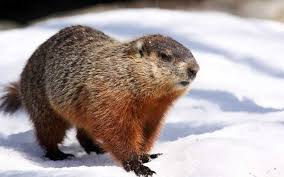 dr nancy berk u0027s tip of the day a groundhog day reminder