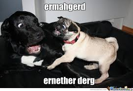 Ermahgerd Animal Memes - ermahgerd dergs by fartfart meme center