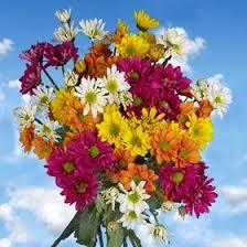 wholesale fresh flowers 40 best birthday flowers images on margarita flower