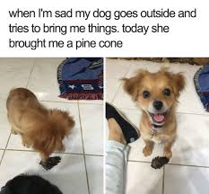 Happy Dog Meme - 27 ridiculously happy dog memes to brighten your day blazepress