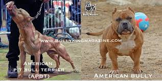 l american pitbull terrier a p b t history of the american pit bull terrier u0026 the evolution of the