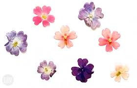 pressed flowers don t these pressed flowers look watercolored i try diy