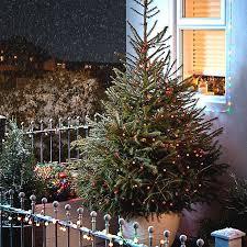 real christmas tree real christmas tree buying guide ideas advice diy at b q