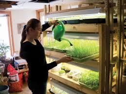 fluorescent lights will fluorescent lights grow plants can