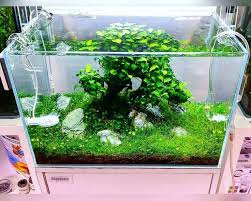 Aquascape Layout 536 Best Aquaria U0026 Scapes Images On Pinterest Aquarium Ideas