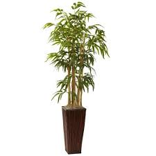 Plants For Office Plants For Office Amazon Com