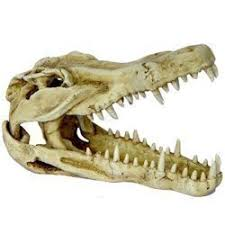 fish tank ornament crocs skull fish tank bank