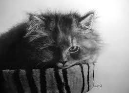 imagenes a lapiz de gatos estas imágenes de gatos no son fotografías son increíbles dibujos