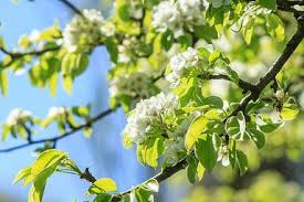 free flowers trees images pictures and premium stock photos