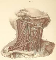 Right Side Human Anatomy Anatomy Atlases Atlas Of Human Anatomy Plate 9 Figure 2