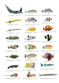 types of indian aquarium fishes u2013 see here u2013 styfisher com