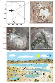 frontiers microbial activity response to solar radiation across