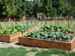 organic winter vegetable garden