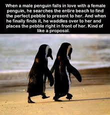 Cute Penguin Meme - 30 best penguins images on pinterest funny animal funny animals