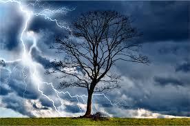 clipart lightning tree