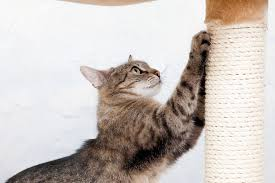9 things that cats like