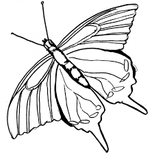 battus philenor butterfly coloring page to print for