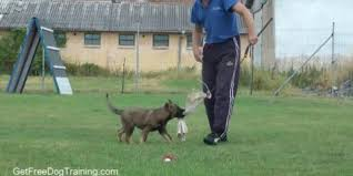 boxer dog training tips obedience training boxer dogs thedogobedience com