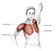 Chest And Shoulder - bent arm chest stretch common shoulder exercises
