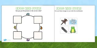 100 frog life cycle template save the frogs colouring