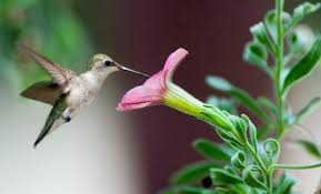 Flower And Bird - growing the beautiful flower gardens to attract the birds home