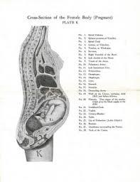 Pregnant Female Anatomy Diagram Pregnancy Related Pelvic Pain Physiopedia
