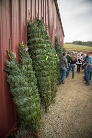 Christmas Trees Nc Lil U0027 Grandfather Mountain Christmas Tree Farm