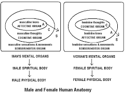 Anatomy Difference Between Male And Female The Organic Mind Discovering The Mental World Of Eternity By