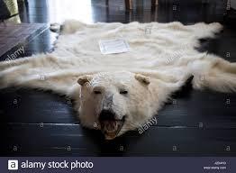 Polar Bear Fur Rug Polar Bear Carpet Ursus Maritimus Hudson Bay Churchill Canada