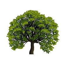 tree symbol big green tree vector symbol stock vector colourbox