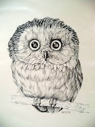 20 best gufi images on pinterest owl art owls and adorable animals