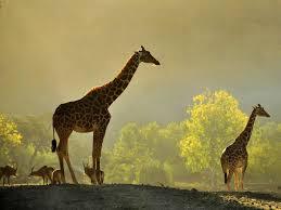 go on safari safari west