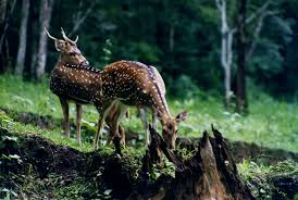 eastern and western ghats western ghats evergreen wild life kerala protect endangered