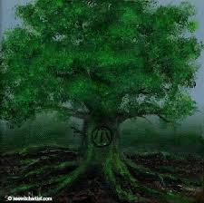 druids oak