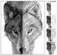 25 beautiful wolf face drawing ideas on pinterest wolf face