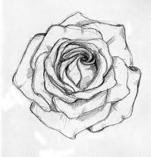photos sketch images of roses drawing art gallery
