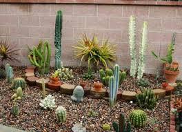 Cactus Garden Ideas Create Your Own Cactus Garden Gardening Pinterest Cacti