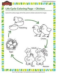 free science coloring pages life cycle coloring page u2013 chicken 1st grade life science