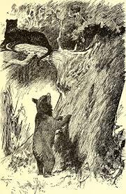 story rudyard kipling u0027the jungle book