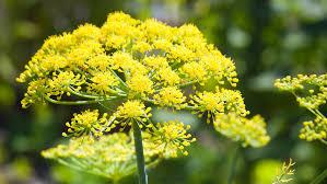 best flowers for bees butterflies sunset