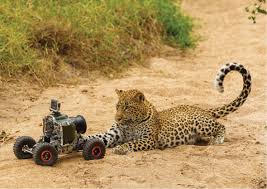 safari africa on safari drones and remote controlled buggies capture